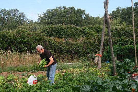 ¡ Mi maridito recogiendo lechugas ! Cancholino 2011. Foto de Merche.