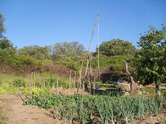 Cancholino: Cigüeñal, cebollas, lechugas y judías. Foto de Merche. P. Privada.