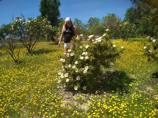 De flores silvestres y  jaras.