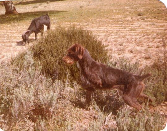 Linda cazando. Foto de Pedro.