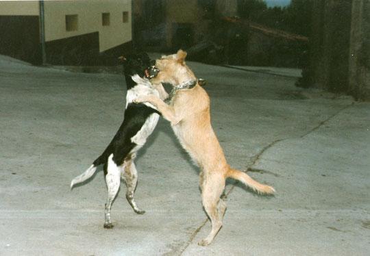 """"""" El coloquio de los perros """" F. P.privada."""