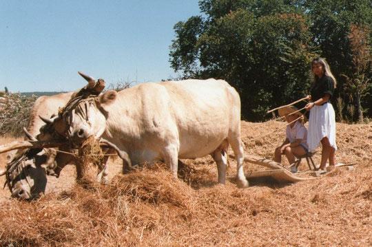 Las vacas siempre pillan algo. F. de Pedro.