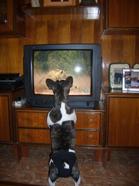 Muu y la tele. F. P. Privada.