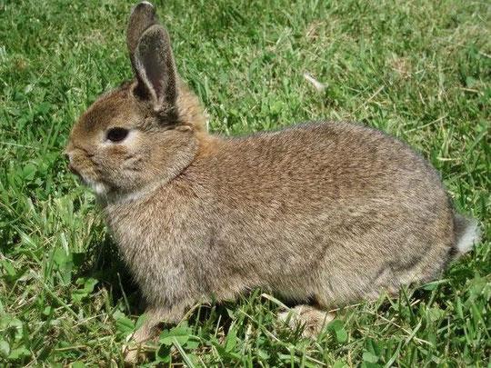 Conejo. F. P. Privada.