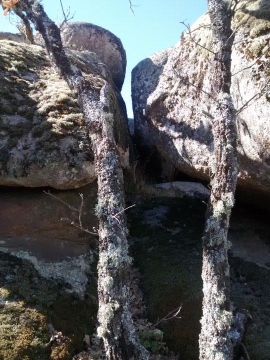 Dúos: dos canchos & dos árboles secos. F. Merche. P. P.