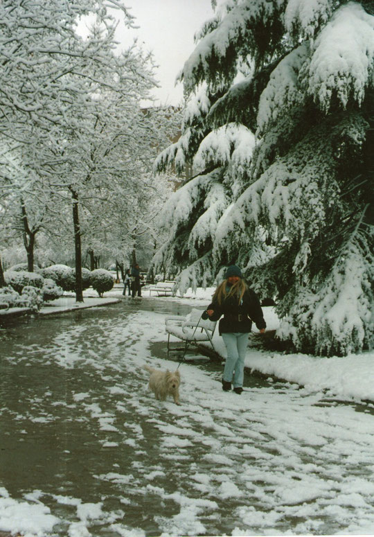 Paseo invernal con perrito.