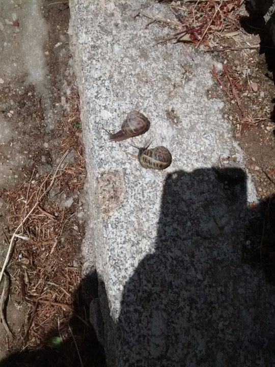 ¡¡ Miren que caracolazos encontré en la Puebla en San Pedro - 2014 !! F. Merche P. Privada.