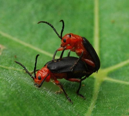Escarabajos.........vaya, vaya, vaya.