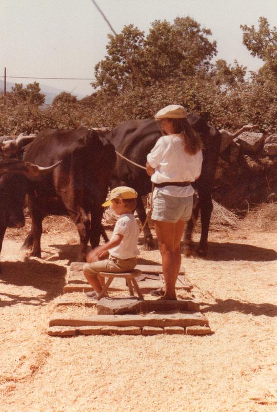 Los ramales que llevamos en las manos, son para dirigir  la yunta de vacas en uno u  otro sentido. F. de Pedro. P. Privada.