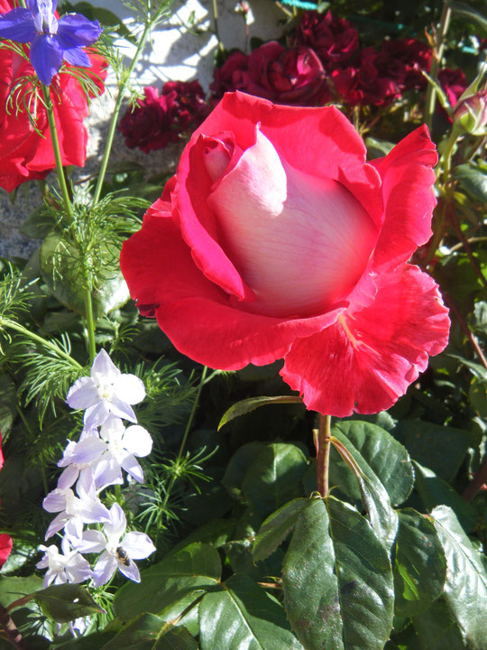 Y de............................rosas.