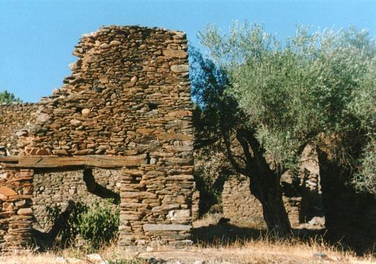 Ruinas y olivos.