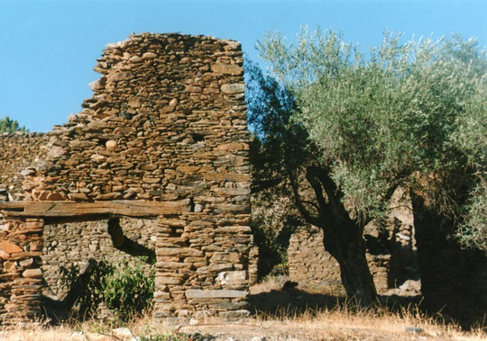 Ruinas y olivos. Merche. propiedad privada.
