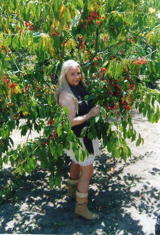 Y así está ahora ......... ¡ cargadito de cerezas ! F. Pedro. P. Privada.