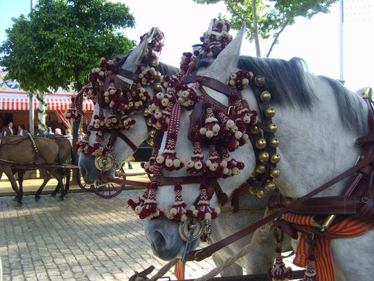 Precioso tiro en el paseo de caballos. F. P. Privada.