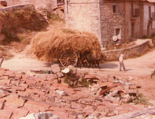 El carro de heno. Foto de Pedro. P. Privada.