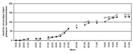 Abb. 4: Anzahl der bis zum jeweiligen Datum gefangener Kammmolch-Individuen (helle Kreise: Gewässer 2, schwarze Kästchen: Gewässer 3).