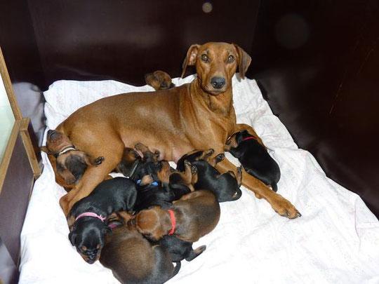 Stolze Mama Onnie mit ihren 2 Wochen alten Welpen, am 13.10.2010