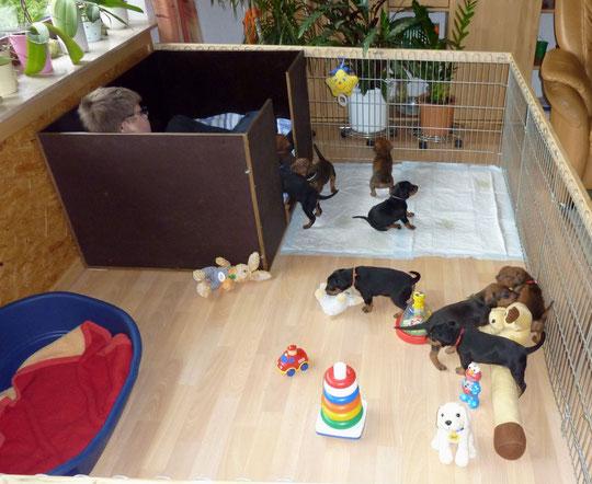 """Die """"Kleinen"""" sind ins Wohnzimmer gezogen, und fühlen sich sichtlich wohl !!"""