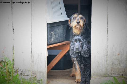 Lilou et Zadkin'