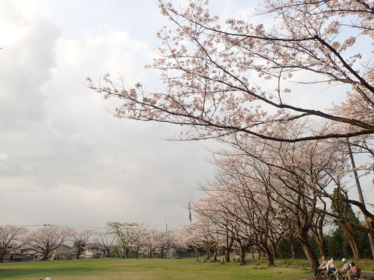 白山神社 桜 2021