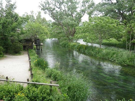 蓼川の3連水車
