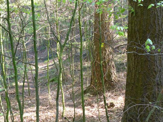 Etwas zugewachsen der Hünenweg an manchen Stellen
