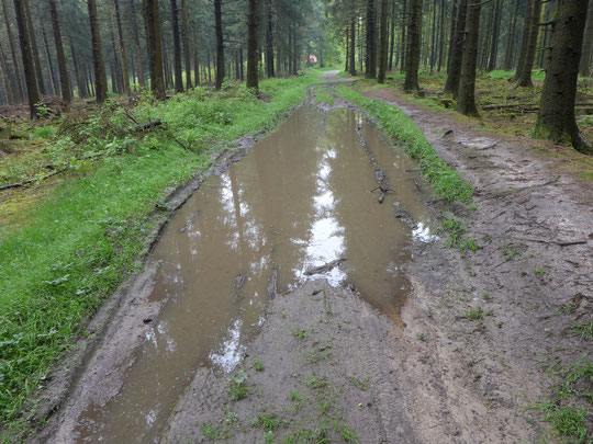 Dauerregen hat alle Wege aufgeweicht und mir heute eine Art Wattwanderung ermöglicht, extrem anstrengend