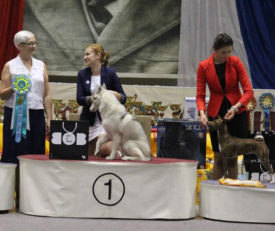 Irina Timkina & Kleona Junior Hendler - 3 place