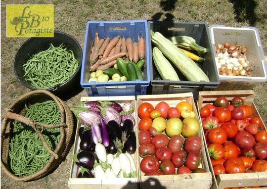 Des légumes goûteux et gorgés de vitamines
