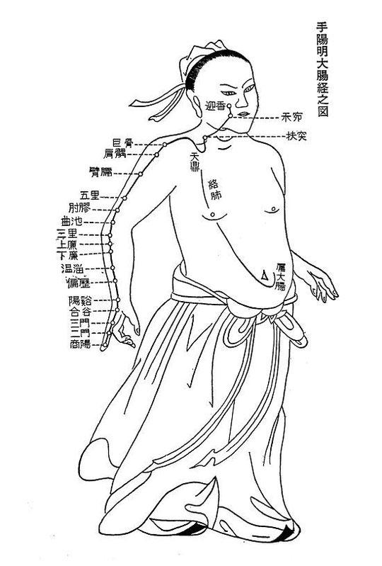 手の陽明大腸経 手の陽明大腸経 商陽(しょうよう)   kodamaryouins jimdo