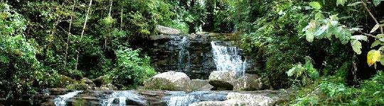 Peru Foresta