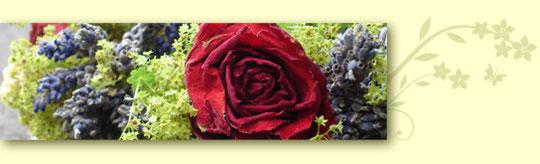 Rose und Lavendel - Kräuterwanderung mit Celia Nentwig