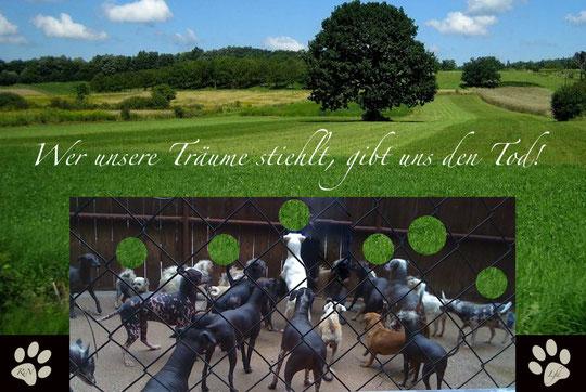 """Vielen Dank an """"Liberty for Dogs""""und """"Nackthunde in Not""""!Ich bewundere Euren Mut und Eure Hartnäckigkeit!!!!Betty"""