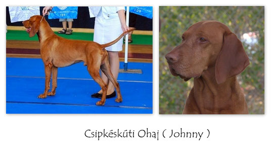 Csipkeskuti Ohaj ( Johnny )