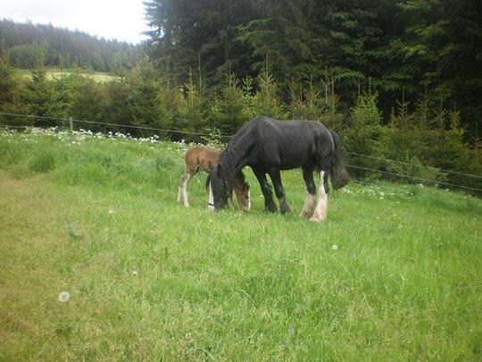 Top Kräuter-)Allergien beim Pferd - natuerlich-pferds Webseite! &IO_19