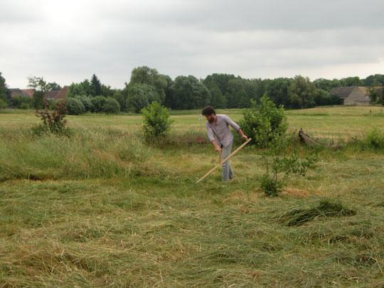 Wiesen müssen geschnitten werden, um die Vilefalt zu erhöhen.