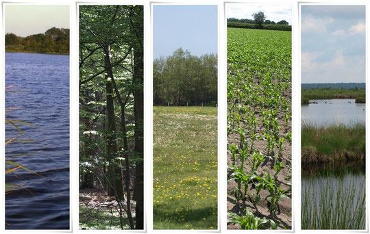 Wasser, Wald, Wiesen, Acker und Moor