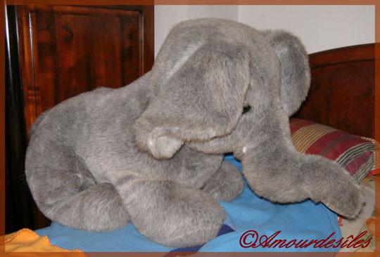 Mon énorme Eléphant, toujours à côté de moi au lit !