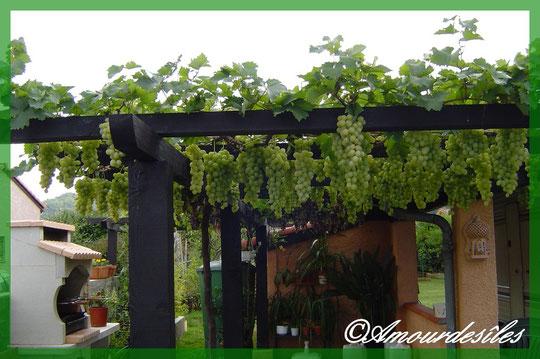 plantation et jardin. Black Bedroom Furniture Sets. Home Design Ideas