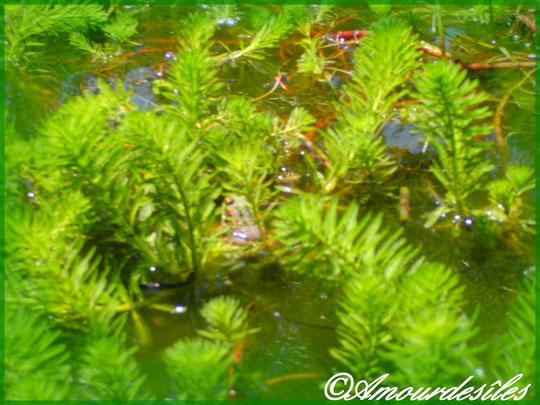 Bien cachée parmi les plantes au milieu