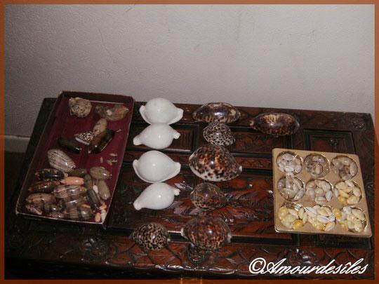 Des monetarias et des annulus pour les toutes petites porcelaines à droite