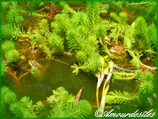 Deux petites grenouilles bien cachées parmi les plantes !