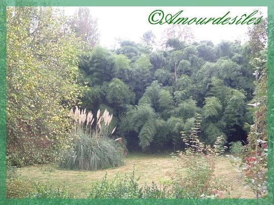 Forêt de bambous et des bouquets de pampas...