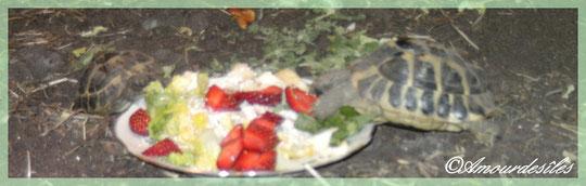 Hummmm, miam miam, un régal ces fraises et cette batavia !