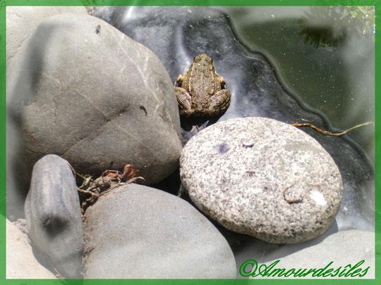 Petite grenouille en train de prélasser au soleil