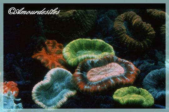 Des coraux fluorescents