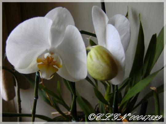 Deuxième floraison de l'année 2011