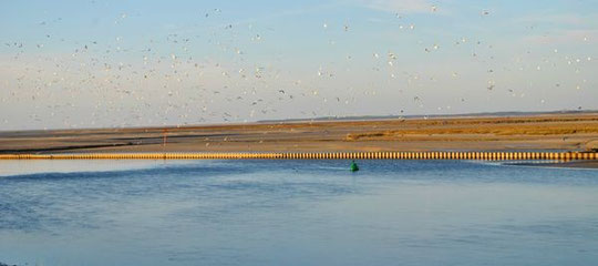 Vue depuis le CKMV Baie des Phoques