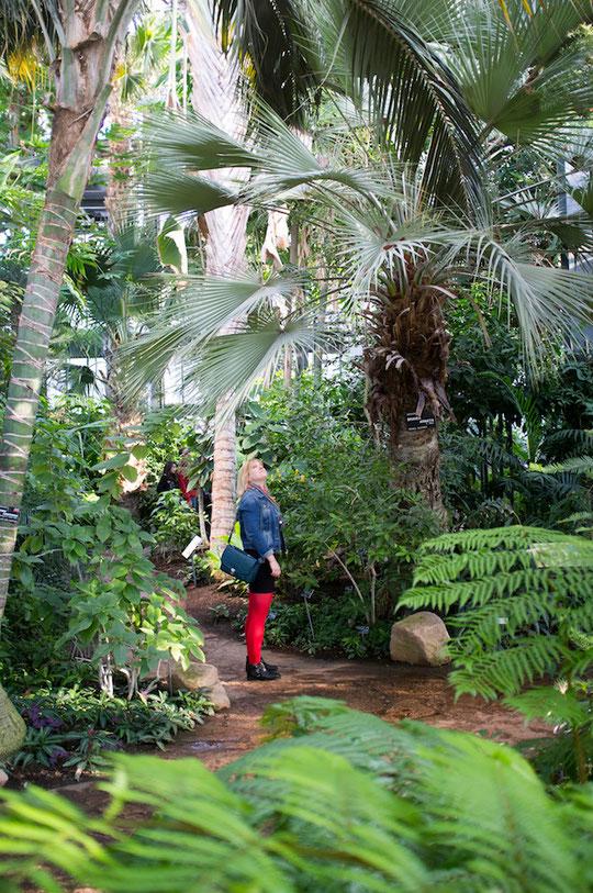 Dans les grandes serres tropicales