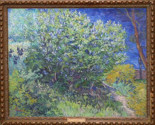 Vincent van Gogh (1853-1890) : buisson